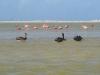 Flamingo\'s - Rio Lagartos