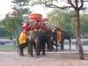 Ayutthaya - olifanten