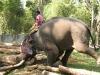 Werkolifant, Topslip