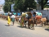 Paardrickshaw, Palani
